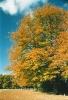 Autumn2-10-03